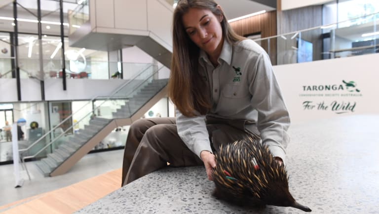 Zoo nutritionist Michelle Shaw is on a team of scientists researching echidna quills, in a bid to help the fight against illegal traffickers.