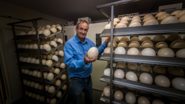 Last year, Hastings sent around 500 chicks to Pakistan for breeding and this year he's looking to kickstart the domestic egg market for unfertilised eggs.