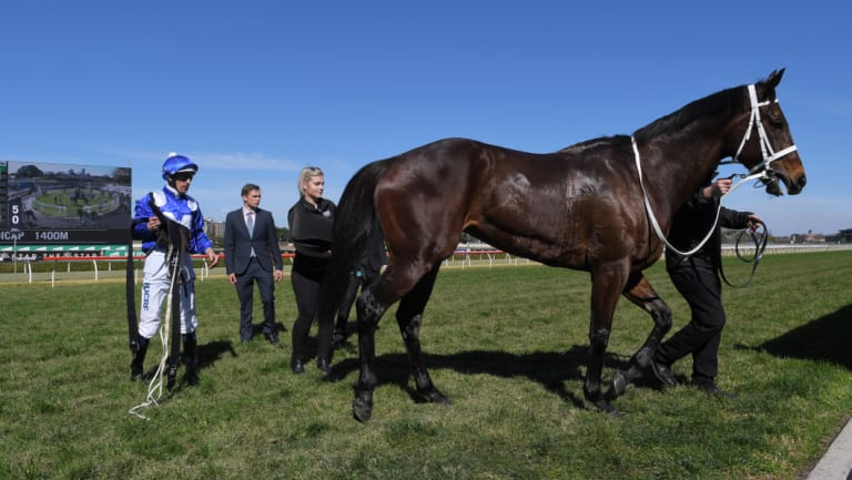 The Queen's back: Winx will look to break Black Caviar's record winning streak in the race named in her honour at Randwick on Saturday