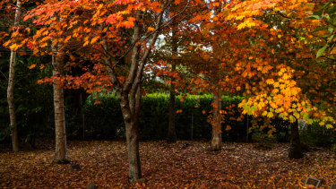 Dog walkers crunch leaves underfoot.