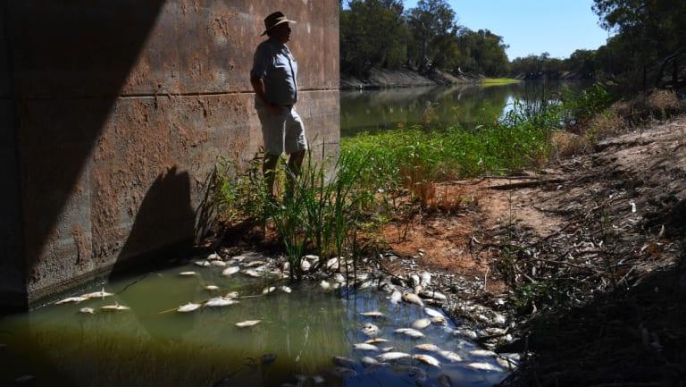 Grazier Rob McBride's video of mass fish deaths went viral.