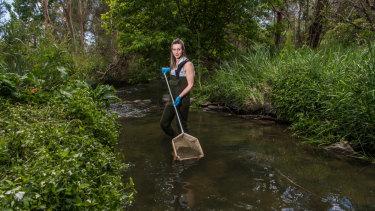 Dr Richmond collecting samples at Brushy Creek