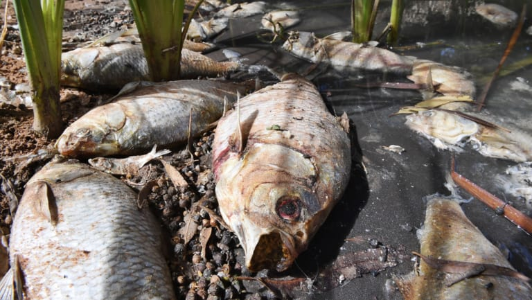 Dead fish and dried river beds are the visual evidence that something is very wrong.