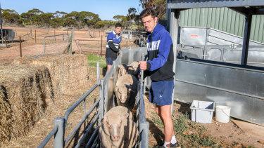Murrayville Community College students taking care of the school's merino herd