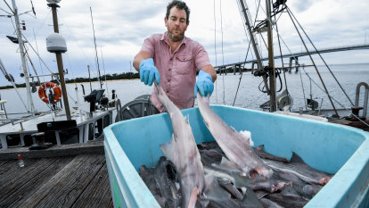Fins are looking up for fishing co-op thanks to Victoria's taste for flake