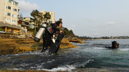 The conservation effort returning lost seaweed to Sydney's shores