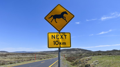 Public weren't asked about shooting brumbies from ground, court hears