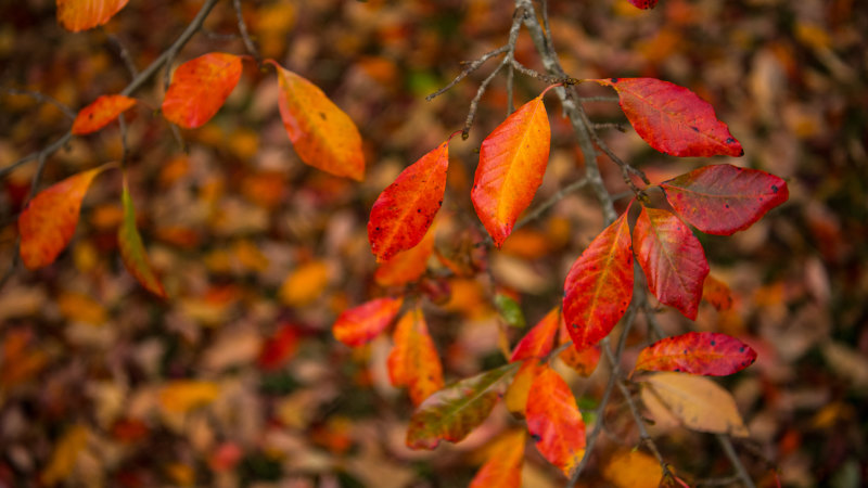 Autumn Is Coming Writers Reflect On The Change Of Season