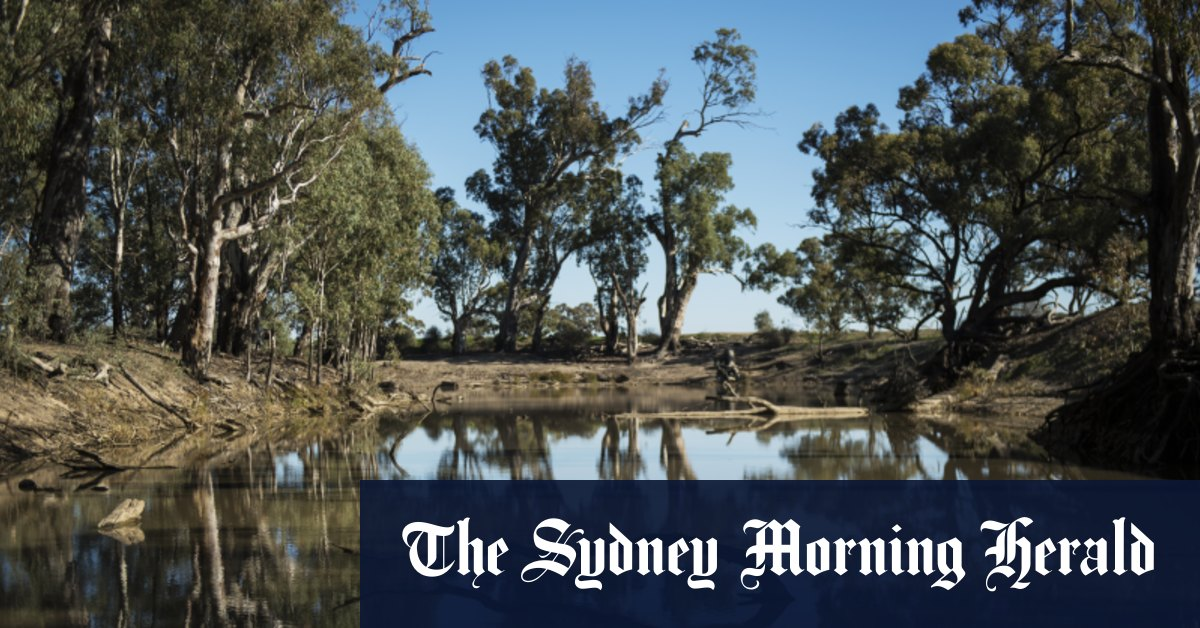 'Serious distrust' in murky Murray Darling water market sinks farmers