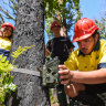 Indigenous researchers keep tabs on totem plants and animals after fires