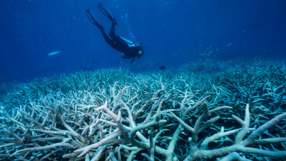 No more excuses about danger to Great Barrier Reef