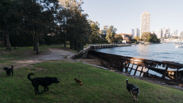 Discarded fish hooks in foreshore parks such as Sawmillers Reserve have been a long-standing concern.