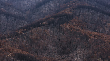 Bushfire affected areas south of Moruya.