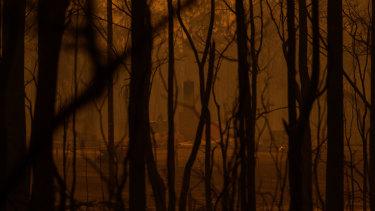 Fire-ravaged bushland on the NSW South Coast.