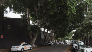 The area features rustic warehouse buildings and towering fig trees.
