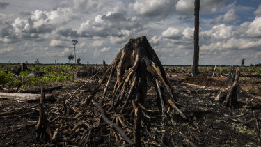 Forest burnt to make way for palm oil plantation,  fire is one of the main land clearing techniques in Indonesia which result in large carbon emissions and respiratory problems.