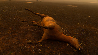 A deceased horse on the outskirts of Cobargo.