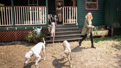 The retirement adoption programs saving greyhounds