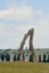 The giant jaw-like sculpture in the grounds of Mona Farm, just outside Braidwood.