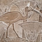 Researchers have shown through genetic testing the ancient Egyptians didn't farm ibises but instead maintained wild populations near temples