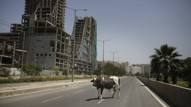 A bull stands in the middle of a deserted road on the outskirts of Delhi during the lockdown to control the spread of COVID-19.