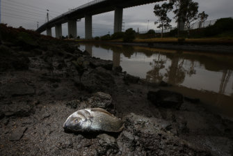 Hundreds of fish died in Stony Creek near the fire in the days following.