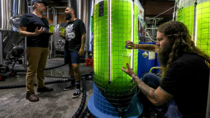 'What the hell is that?': Brewery uses algae to reduce carbon emissions