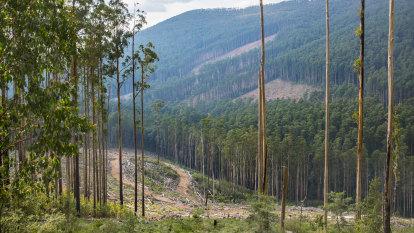 Devil in the detail in Daniel Andrews' logging announcement