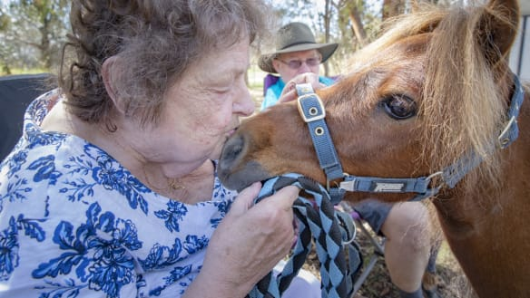 Miniature horse Maverick is providing relief to nursing home residents