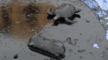 Brazil blames Greek ship for devastating slow-drip oil spill