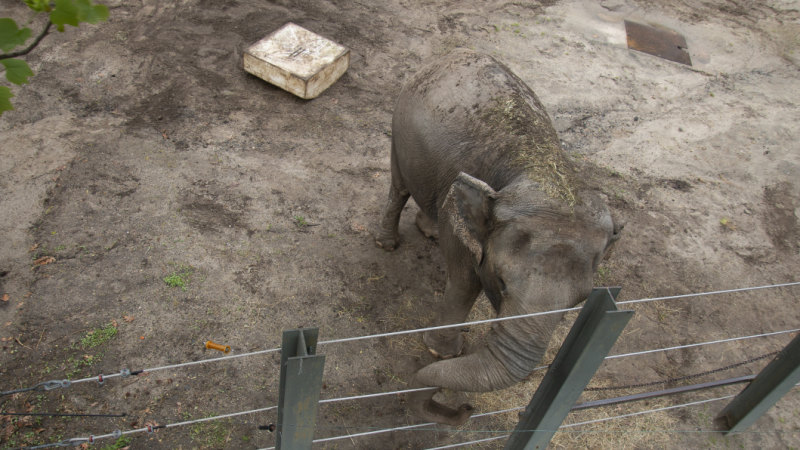 Bronx Zoo elephant Happy gets court win ahead of her biggest trial