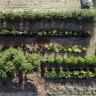 Good news for gardeners: minimal effort can grow a long way