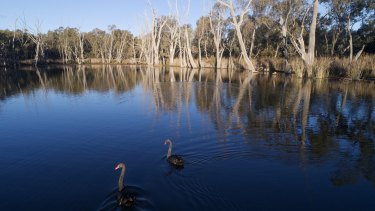 Gunbower Creek wetlands near Echuca in the Murray Darling Basin.