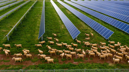 The surprising way renewables can help farmers cope