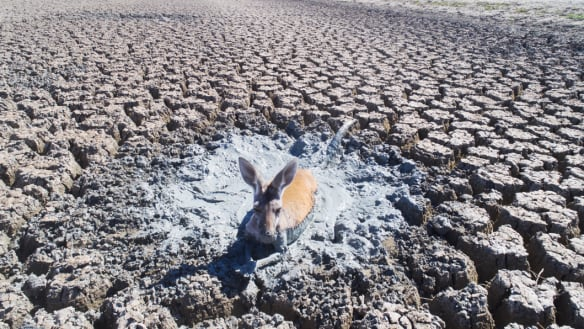 Dead fish in Menindee are about mismanagement not drought