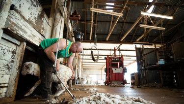 Shearer, Richard Hutchinson, usually has several shearers working with him at this time of year, but because there is less stock, due to the continuing drought across NSW, he is working alone.