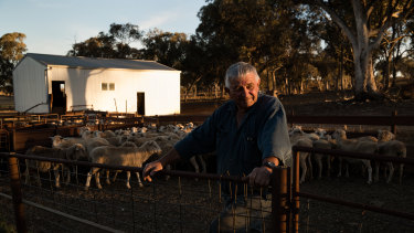 Ian Gosper, with the breeding sheep he will take to the abattoir in the morning.