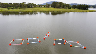 The five separate water columns at Lake Tuggeranong, which go 10 metres deep and hold 160,000 litres of water each.