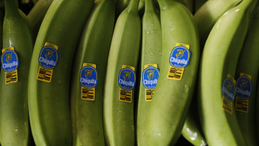 A tray of freshly picked Chiquita bananas are readied for packing and export at a farm in Ciudad Hidalgo, Chiapas state, Mexico.