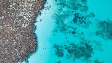 The sharks arrive at Ningaloo Reef in March and share the waters with manta rays and turtles, among others.