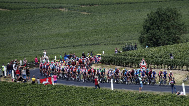 The pack rides through vineyards during the fourth stage of the Tour de France.