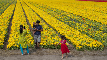 A family takes photos in a field of tulips next to the main road in Lisse, Netherlands, on Sunday. Many Dutch tulip growers have destroyed their flowers this year.