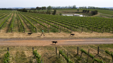 Dams that were full in 2016 at See Saw Wines are now running out of water.