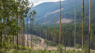A logging coupe in the Rubicon forest in central Victoria in 2017.