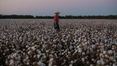 Cotton exports could be the next to be targeted by China.