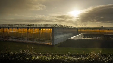 Plants grow with artificial lights and regulated climate conditions in greenhouses near Gouda, Netherlands.