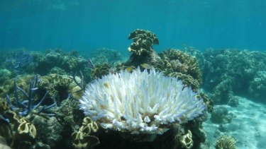 Professor Peter Ridd has long contended that coral bleaching is overstated and the Great Barrier Reef is in good health.