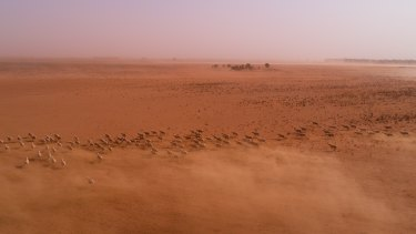 Dust storms sweep desolate farms near Balranald in south-west NSW as drought impacts the region.