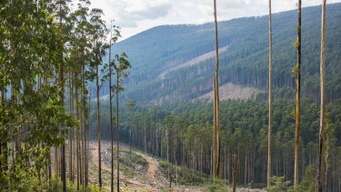 A logging coupe in central Victoria.