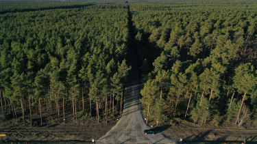 """The forest property where US automaker Tesla is to build a new """"gigafactory"""" near Gruenheide, Germany."""